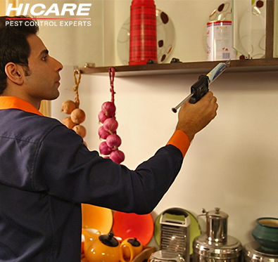 Upto 40% off on pest control services @ Hicare
