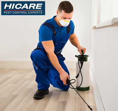 Upto Rs 1200 off on pest control services @ Hicare.in
